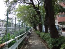 2006_0930sakura0016