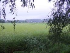 2008_09030007